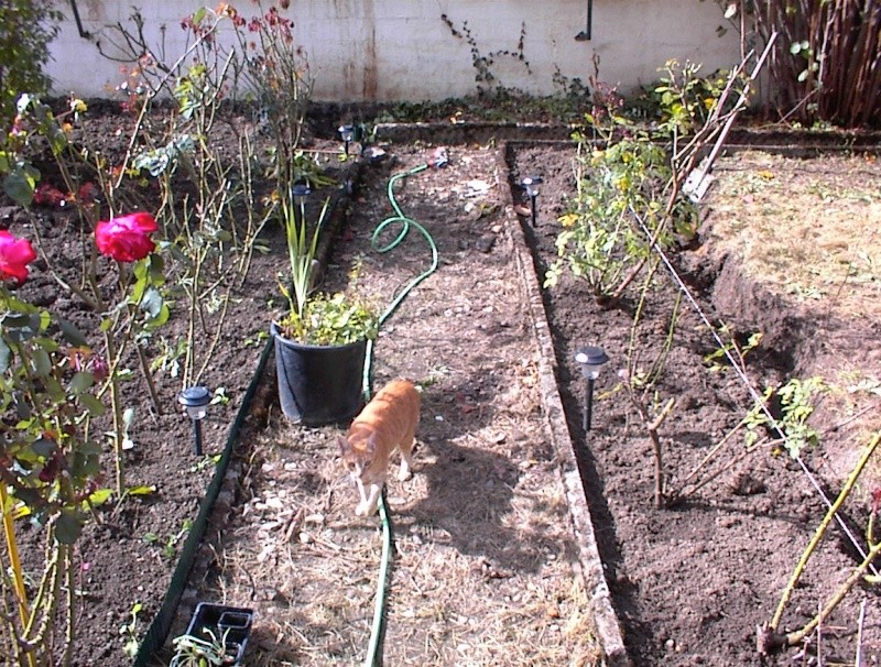 Restauration de jardin Dsc00023
