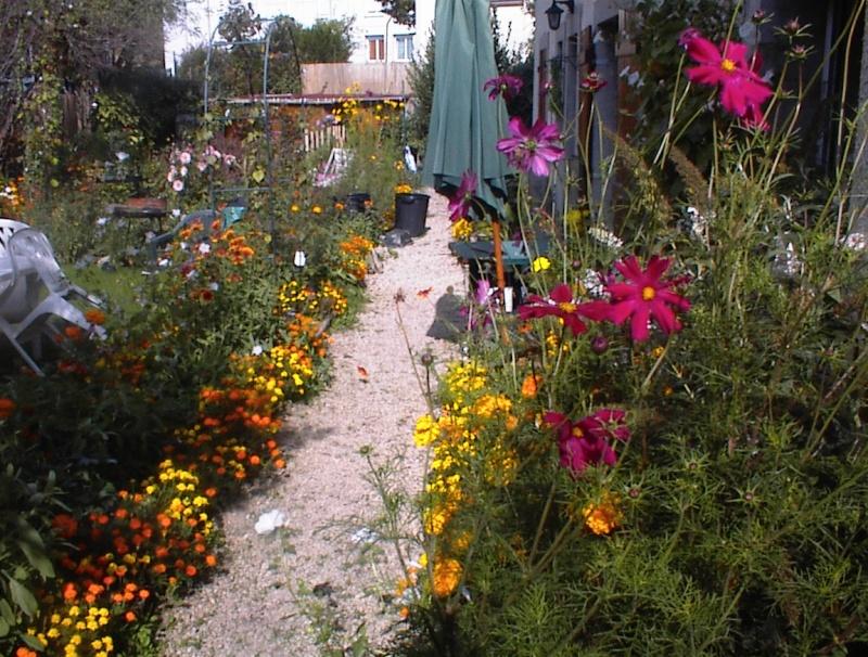 Restauration de jardin Dsc00026