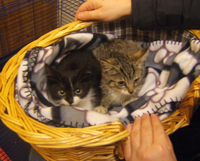 Maya et Sury, 2 fifilles nées le 7 septembre 2009 (4 mois) Chaton10