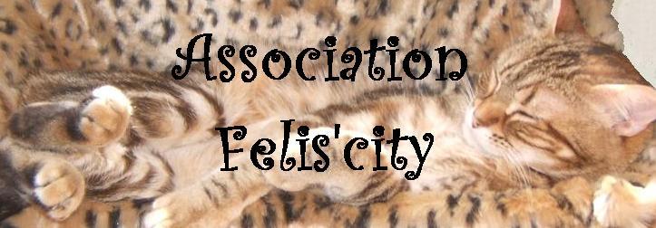 Felis'city