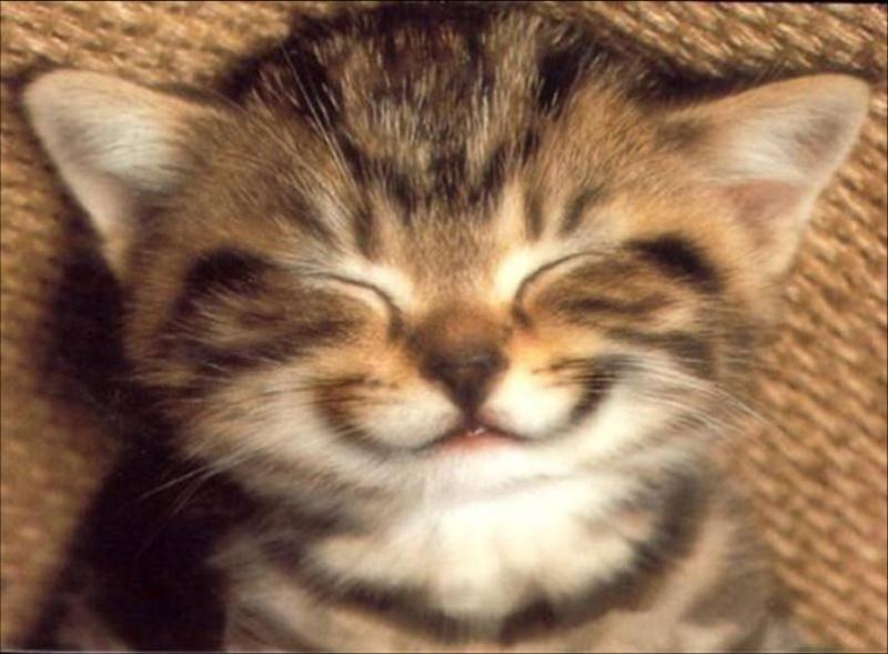 Un sourire par mois ! Chat-s10