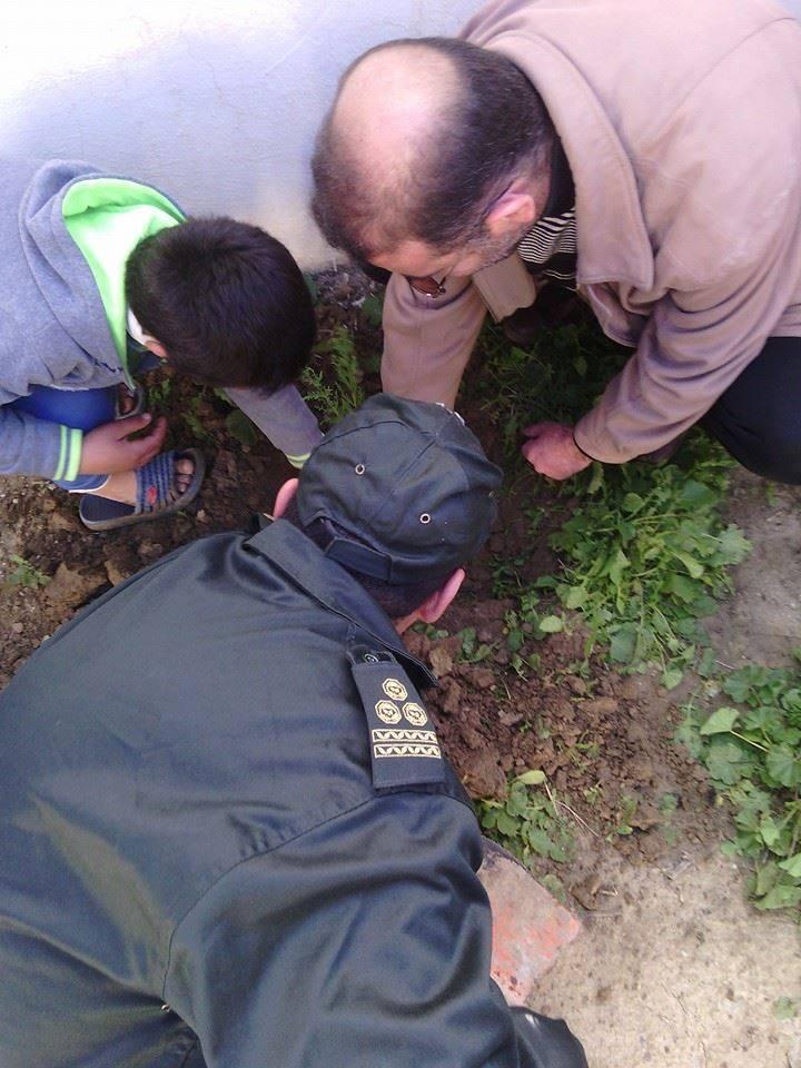 entré - campagne de reboisement entre la circonscription des forets djendel et Fcwad Ain Defla.  10366011