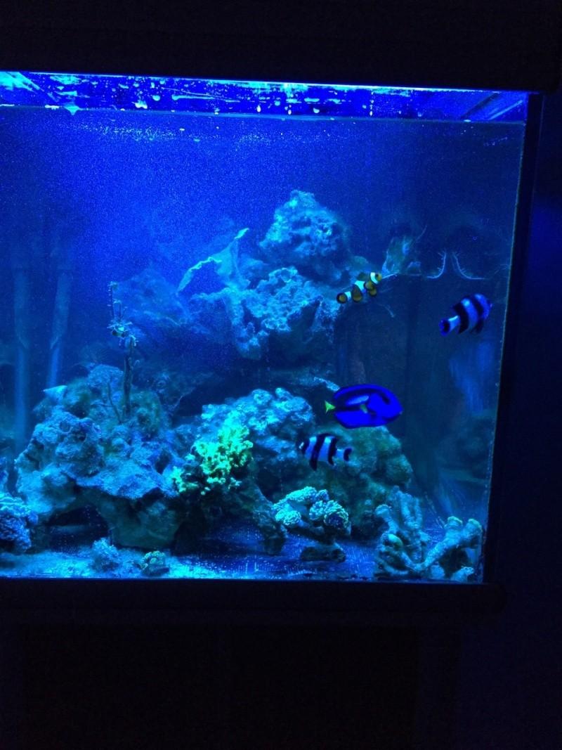 aquatlantis recifal 270L de niko (débutant eau de mer) Image10