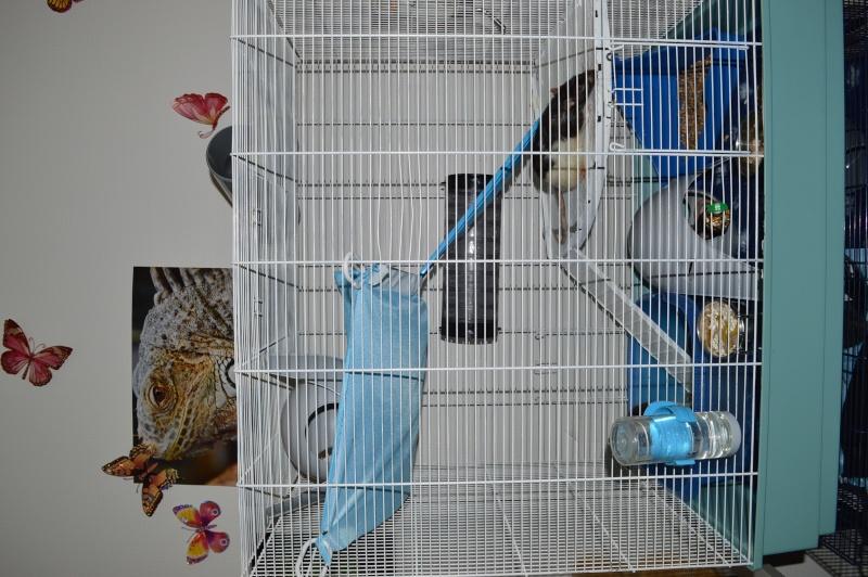 De retour dans le monde du rat Dsc_0115