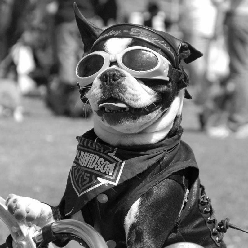 DOG'S & BIKES ATTITUDES - Page 2 12190010