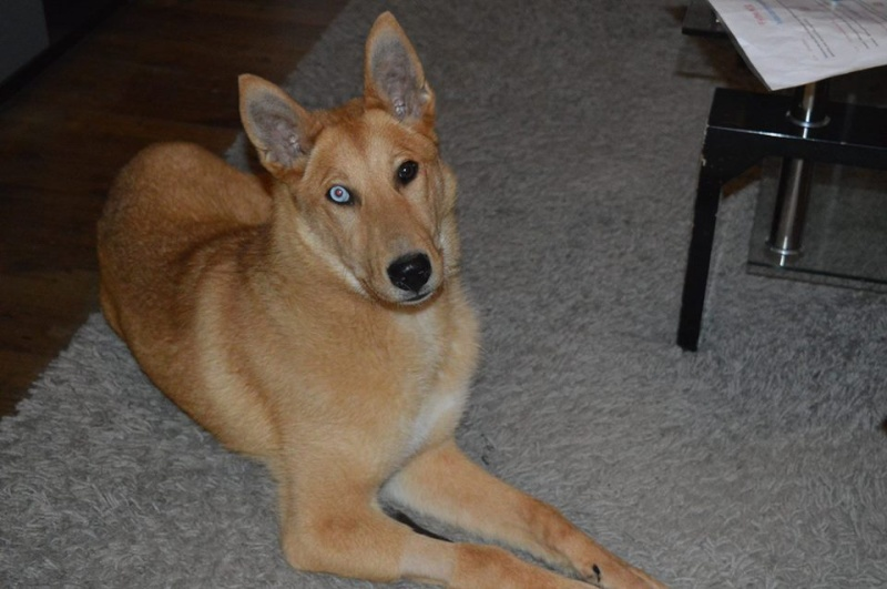 Loria, croisée Husky 1 an, REFU79 10426810