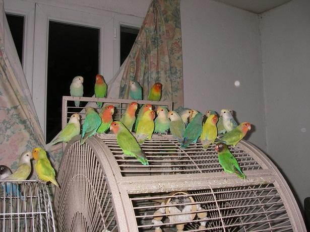 Frann et ses oiseaux 25inse10