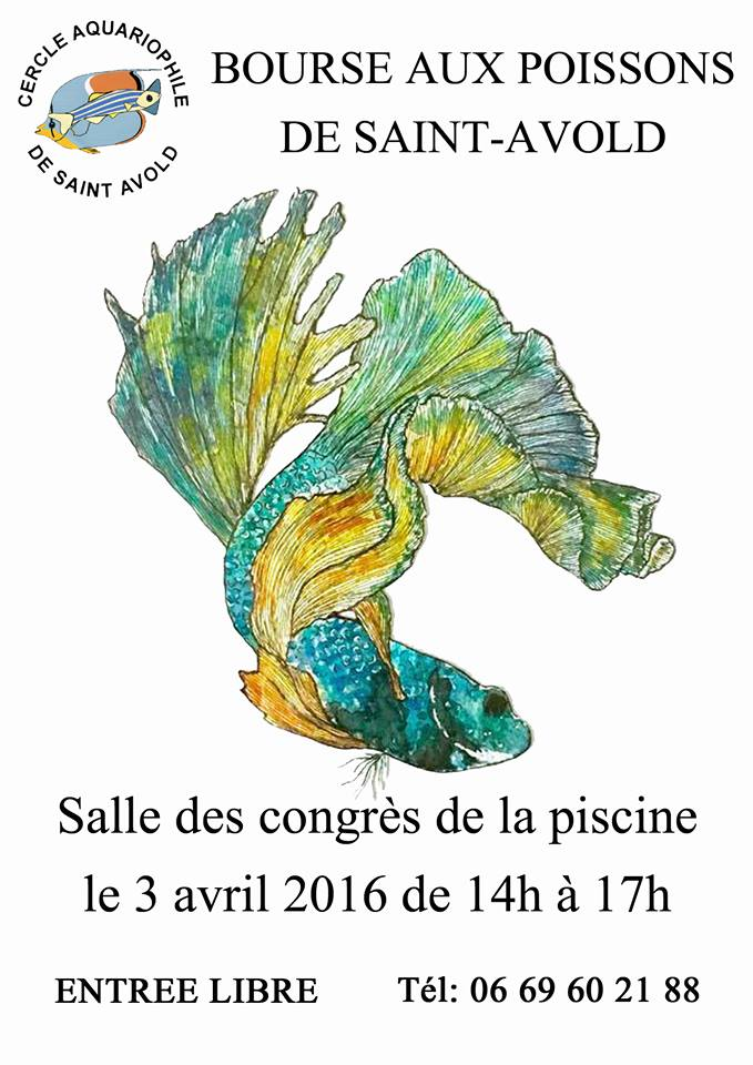 Bourse à Saint-Avold - 3 avril 2016 après-midi Af_sta10