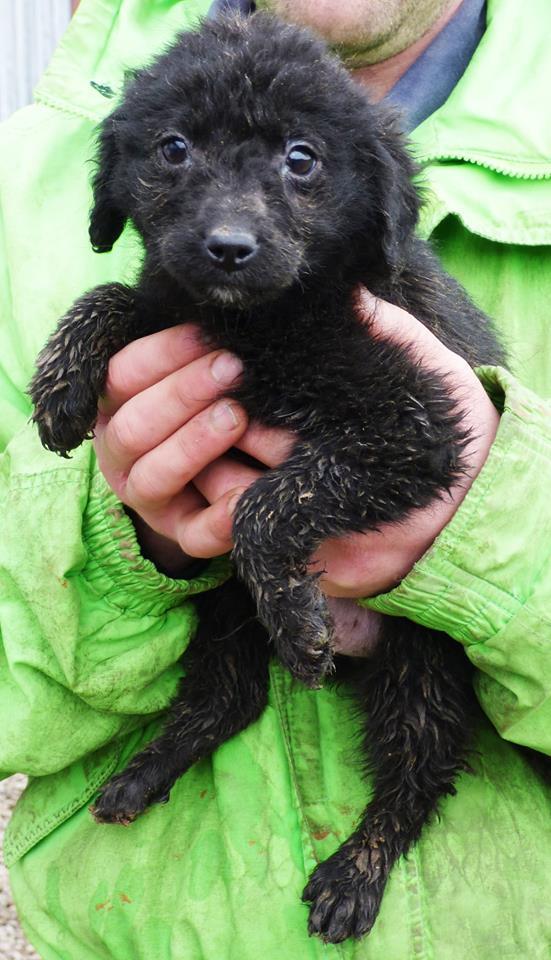 TILK, mâle, taille petite, né environ en  2016 - REMEMBER ME LAND - En FA chez Christiane (Belgique)  10420310