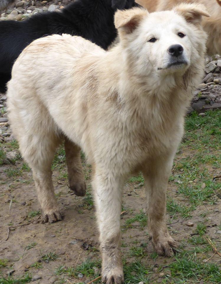 KIOWA !! + de 3 ans de box !! femelle, née environ en mars 2014, taille moyenne (Pascani)- REMEMBER ME LAND 10470810
