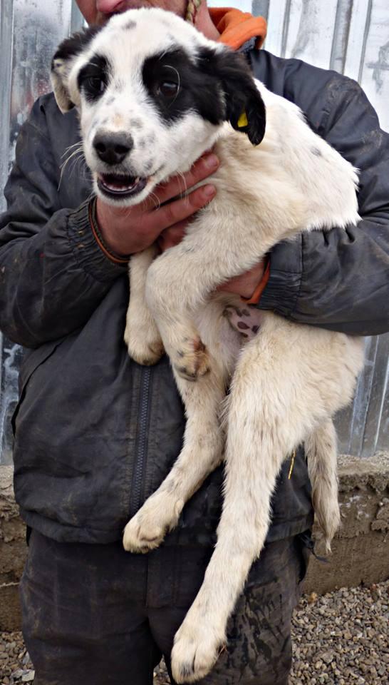 DANDY,  mâle, né en 2015 - (Moinesti) - REMEMBER ME LAND - Adopté par Julie (dep 88) 12717910