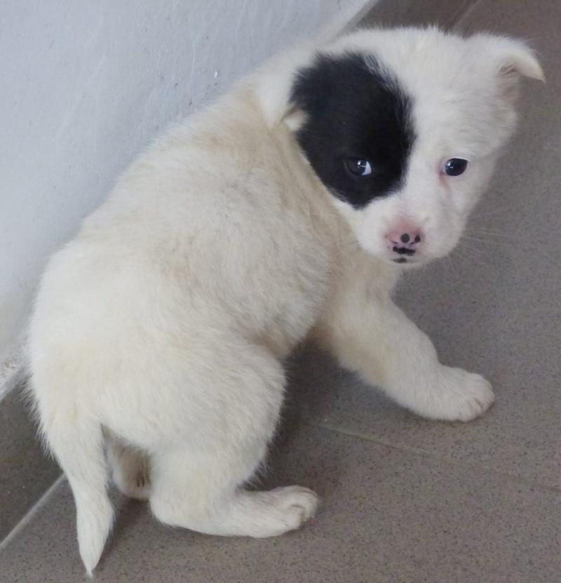 SISSI (ex ARLEQUINE), chiot femelle, née en décembre 2015 - REMEMBER ME LAND - adoptée par Irène (dpt74) 12783512
