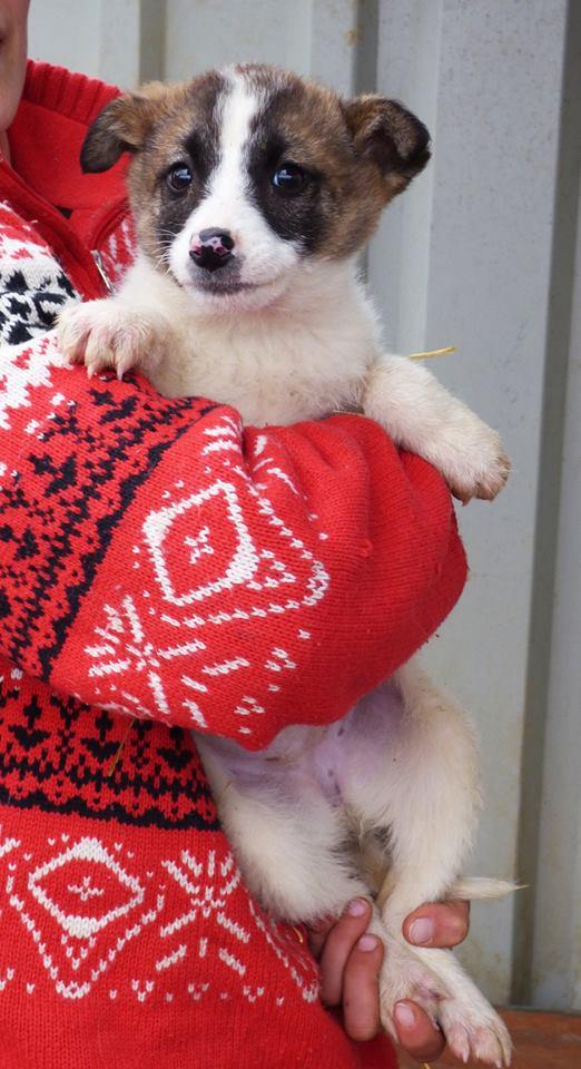 SURICATE, chiot femelle, née en novembre 2015 - REMEMBER ME LAND - dcd 12794510