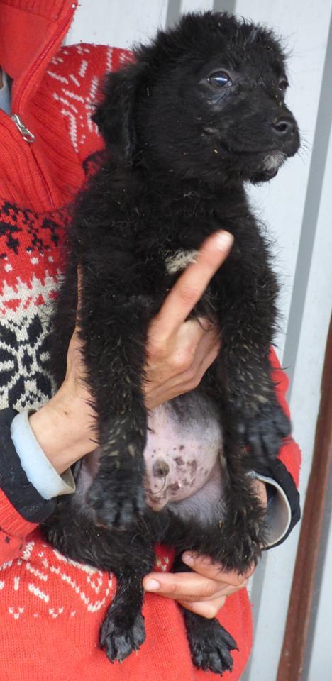 TILK, mâle, taille petite, né environ en  2016 - REMEMBER ME LAND - En FA chez Christiane (Belgique)  12795510