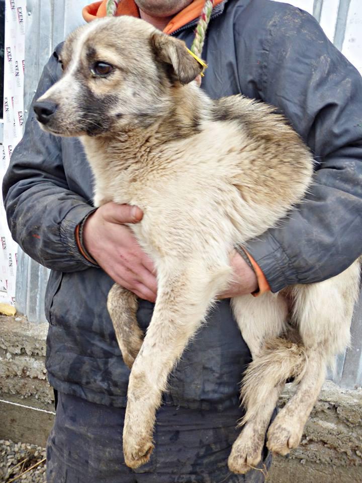 JANGO- mâle croisé - Adopté par Anne-France (Belgique) DECEDE 12795511