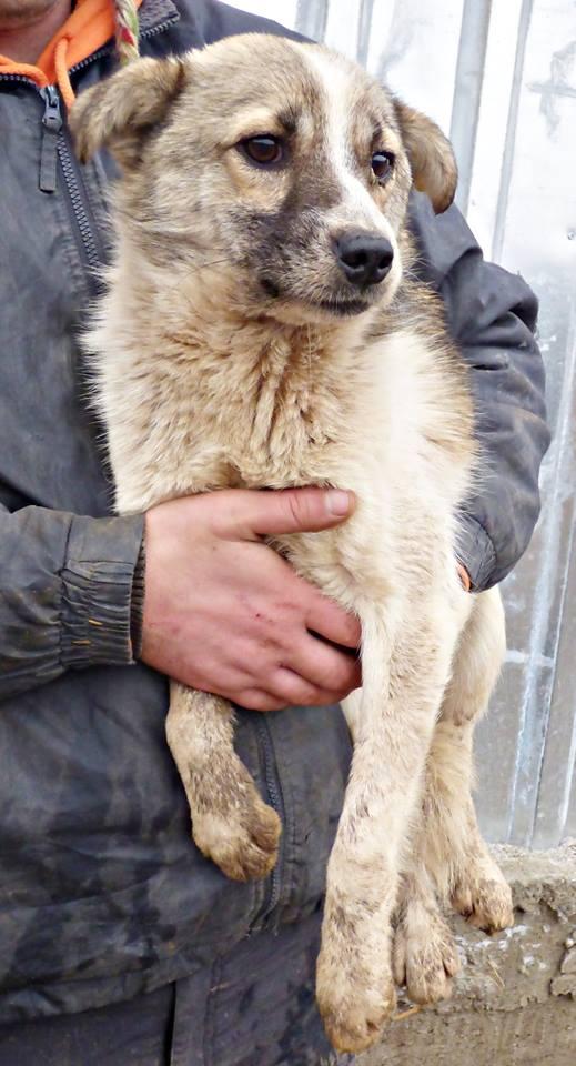 JANGO- mâle croisé - Adopté par Anne-France (Belgique) DECEDE 12800112