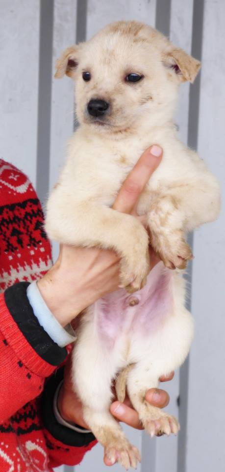 YUKI, chiot mâle, né en novembre 2015 (Pascani)-REMEMBER ME LAND-Décédé 12804710