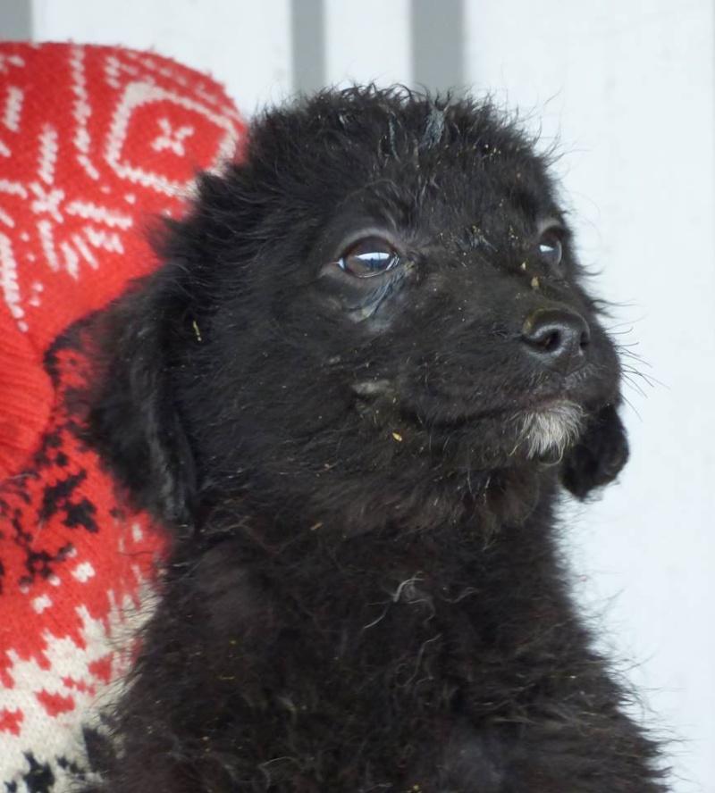 TILK, mâle, taille petite, né environ en  2016 - REMEMBER ME LAND - En FA chez Christiane (Belgique)  12805710