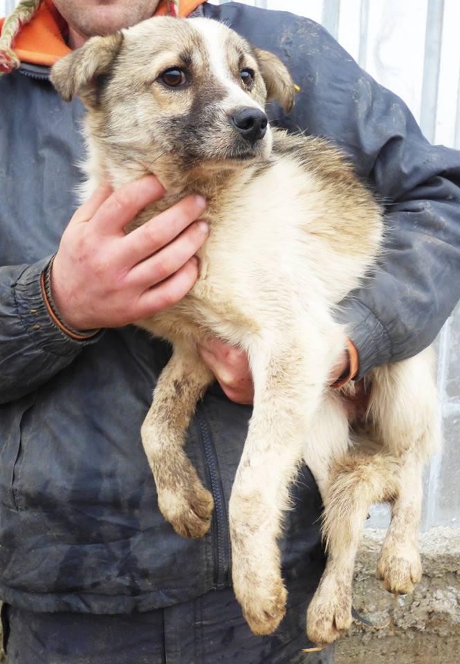 JANGO- mâle croisé - Adopté par Anne-France (Belgique) DECEDE 15543410