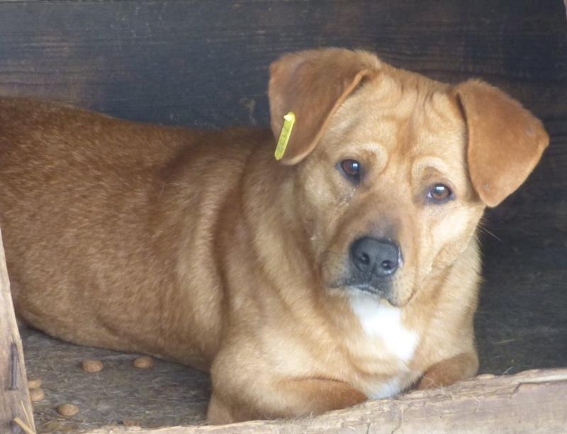MAXX, né en 2013, mâle croisé, petite taille (Pascani)- En FA chez Emilie (15)- décédé  88513210