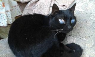 Chat mâle, 15 ans, Var Felix_10
