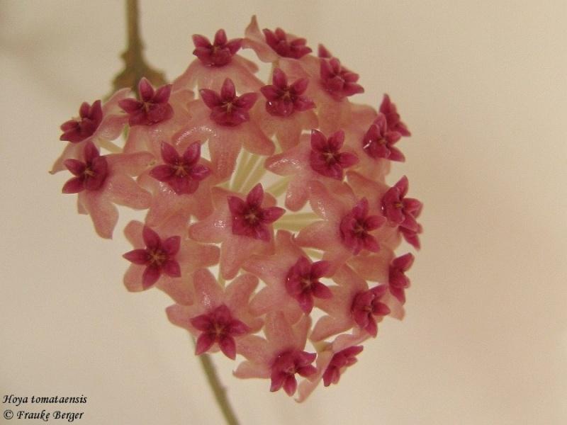Blüten 2016 03_hoy12