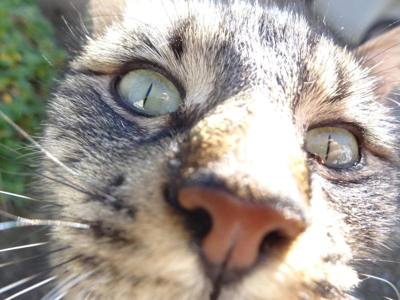IRMA chaton femelle 10/06/2013 adoptée par jennifer  ( 85 ) 10469312