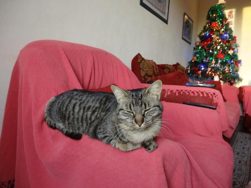 IRMA chaton femelle 10/06/2013 adoptée par jennifer  ( 85 ) 12823413