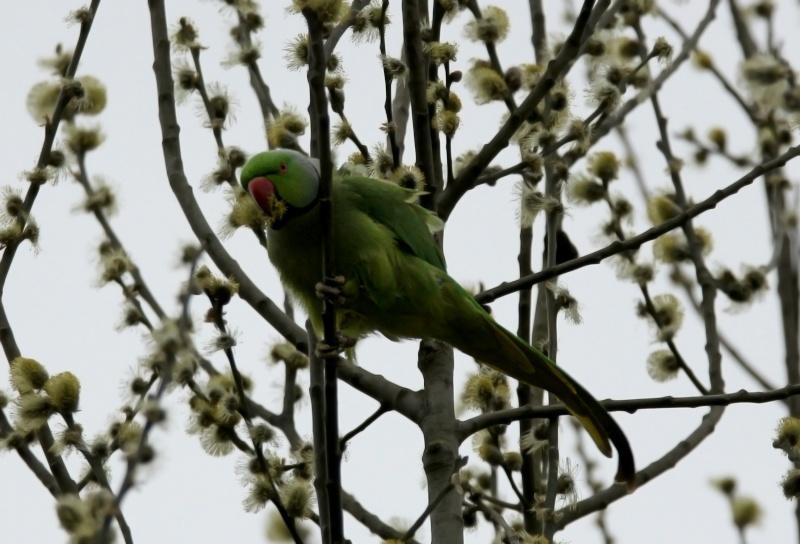 Oiseaux ...  (Staffilou) Img_7211