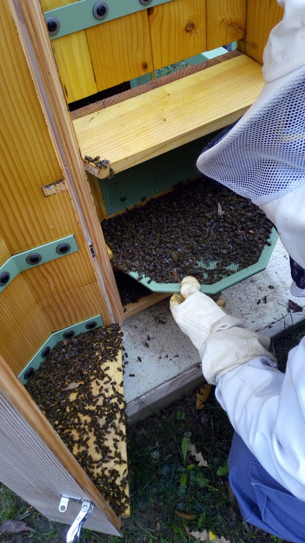 Nous constatons ce jour la mort de toutes les abeilles de la ruche... samedi 15 décembre 2018 Img_2012