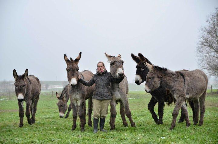 Les races d'ânes 16837910