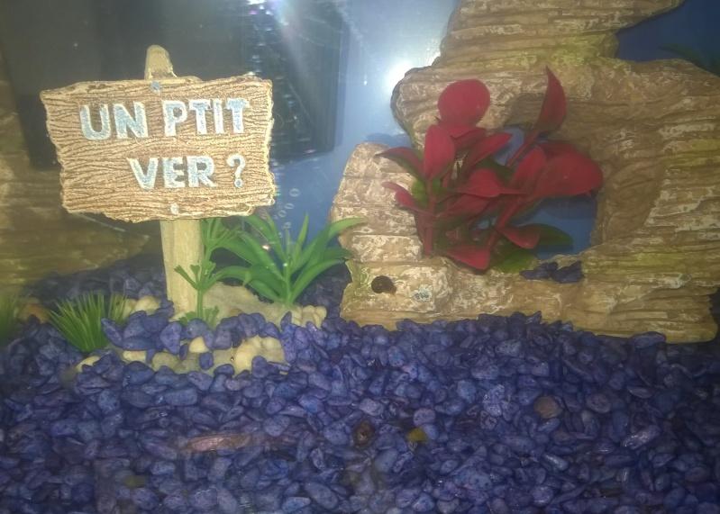 MARINA Goldfish  Wp_20116