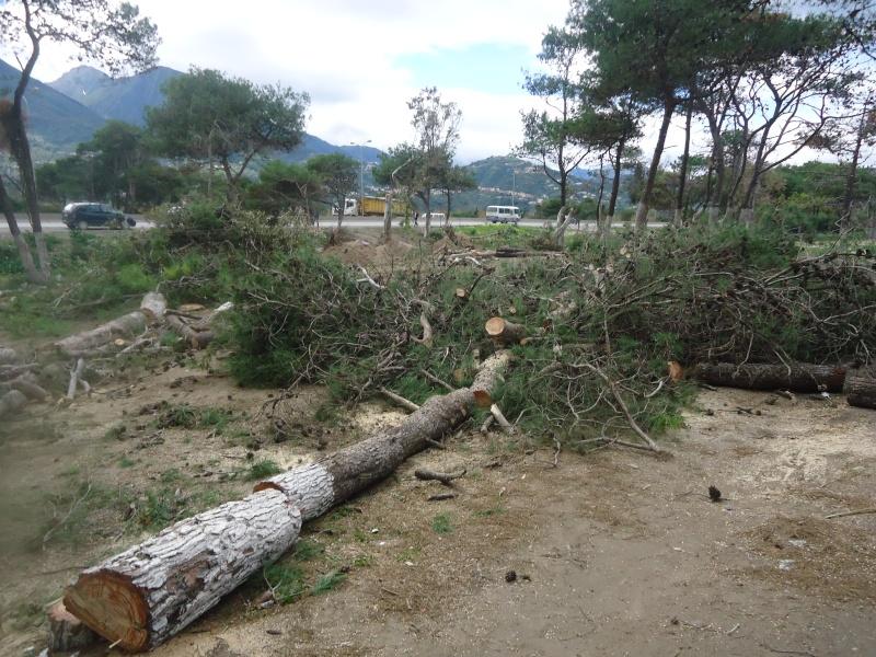 Marche à Aokas contre la destruction de la bande boisée  - Page 2 Dsc06718
