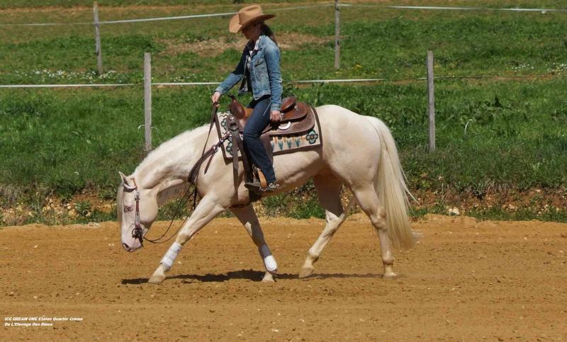 Ice Dream One étalon Quarter Horse Crème 30-web12