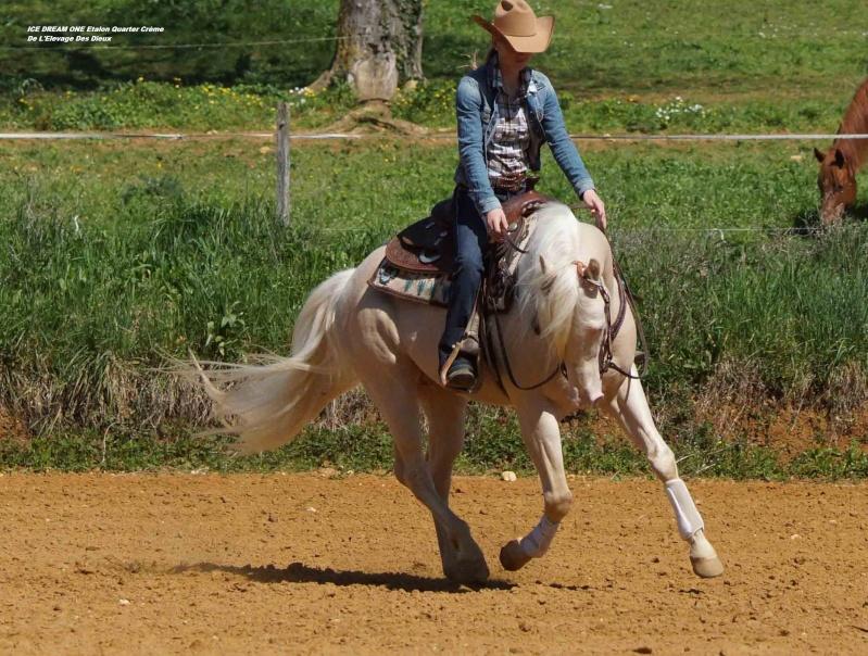Ice Dream One étalon Quarter Horse Crème 33-web12