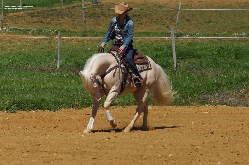 Ice Dream One étalon Quarter Horse Crème 40-web12