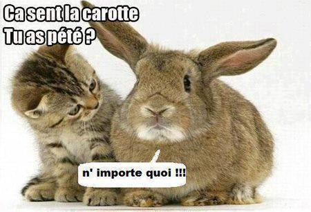 Images Animaux  - Page 17 5b350410