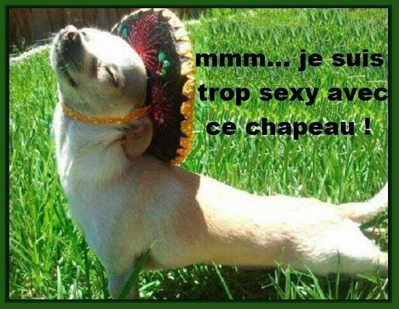 Images Animaux  - Page 17 Humour11