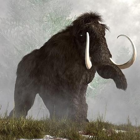 Demande d'ajout de monstres dans le bestiaire - Page 2 Mammou10