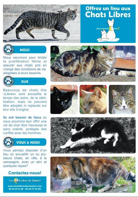 """Accueillez un chat """"sauvage"""" dans votre jardin Pannea11"""