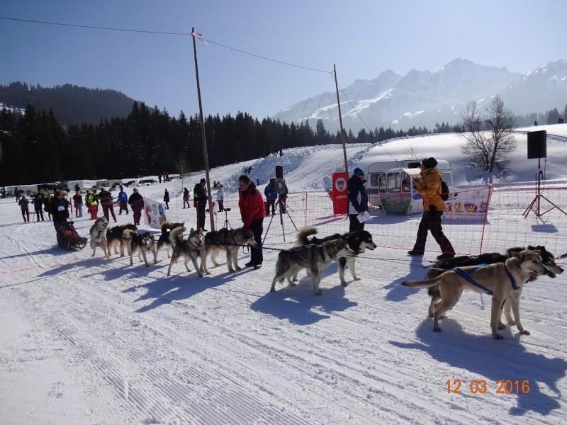 Course internationale de traîneaux à Chiens - Les Mosses - Suisse 110