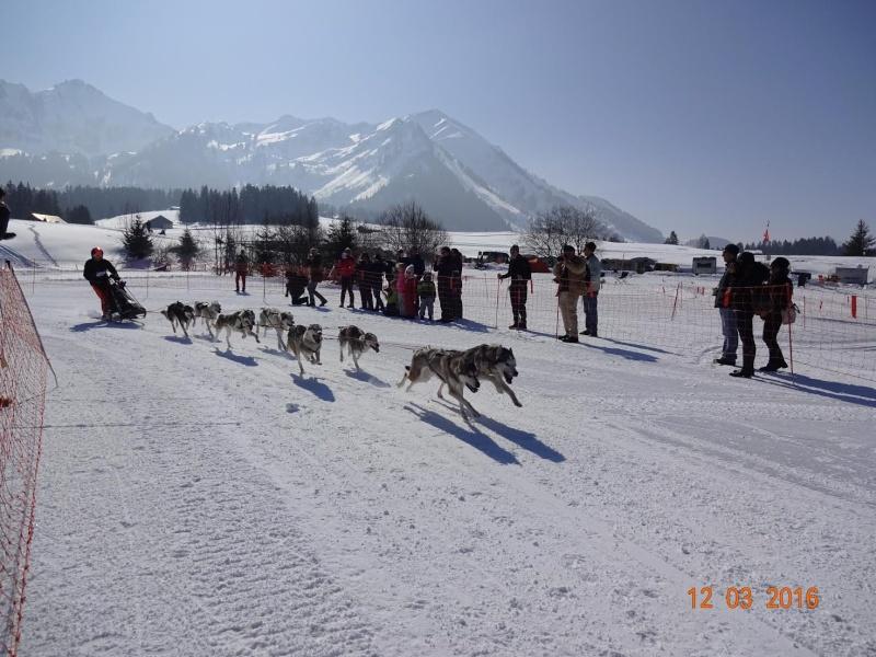 Course internationale de traîneaux à Chiens - Les Mosses - Suisse 210