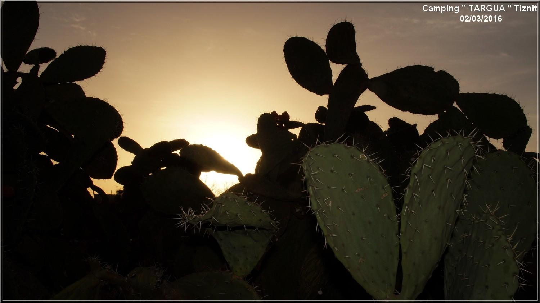 [Maroc Camp/Dernières nouvelles] 7 h 1/2 le jour se lève au Camping TARGUA de Tiznit  Dsc04410