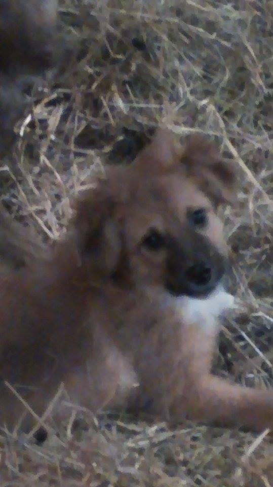 HARIBO (ex HARRISON),  mâle, né en septembre 2015 (Pascani) - adopté par Célia (depart67) - DOIT CHANGER DE FAMILLE URGENT - Page 2 12833410