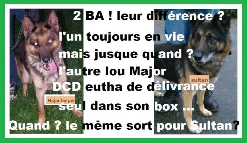 BOX 7 - SULTAN ba 13 ans - Les Loulous de Marie - Bethune (62) Captur12
