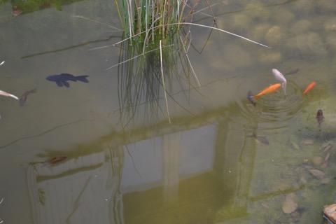 Je suis triste, mes poissons sont morts!!! Dsc_3710