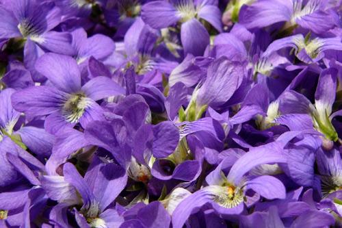 Bon Vendredi Violet10