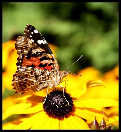 Fil ouvert - Proxi - Papillons 106_to10
