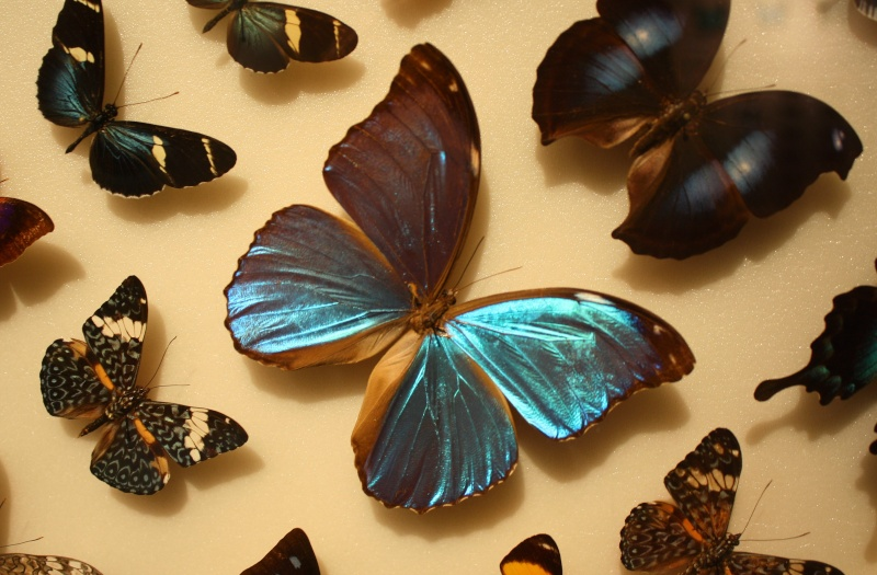 Fil ouvert - Proxi - Papillons Coconu10
