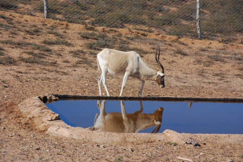 [Maroc Camp/Dernières nouvelles] Camping TAKAT (janvier 2016) Dsc_7911